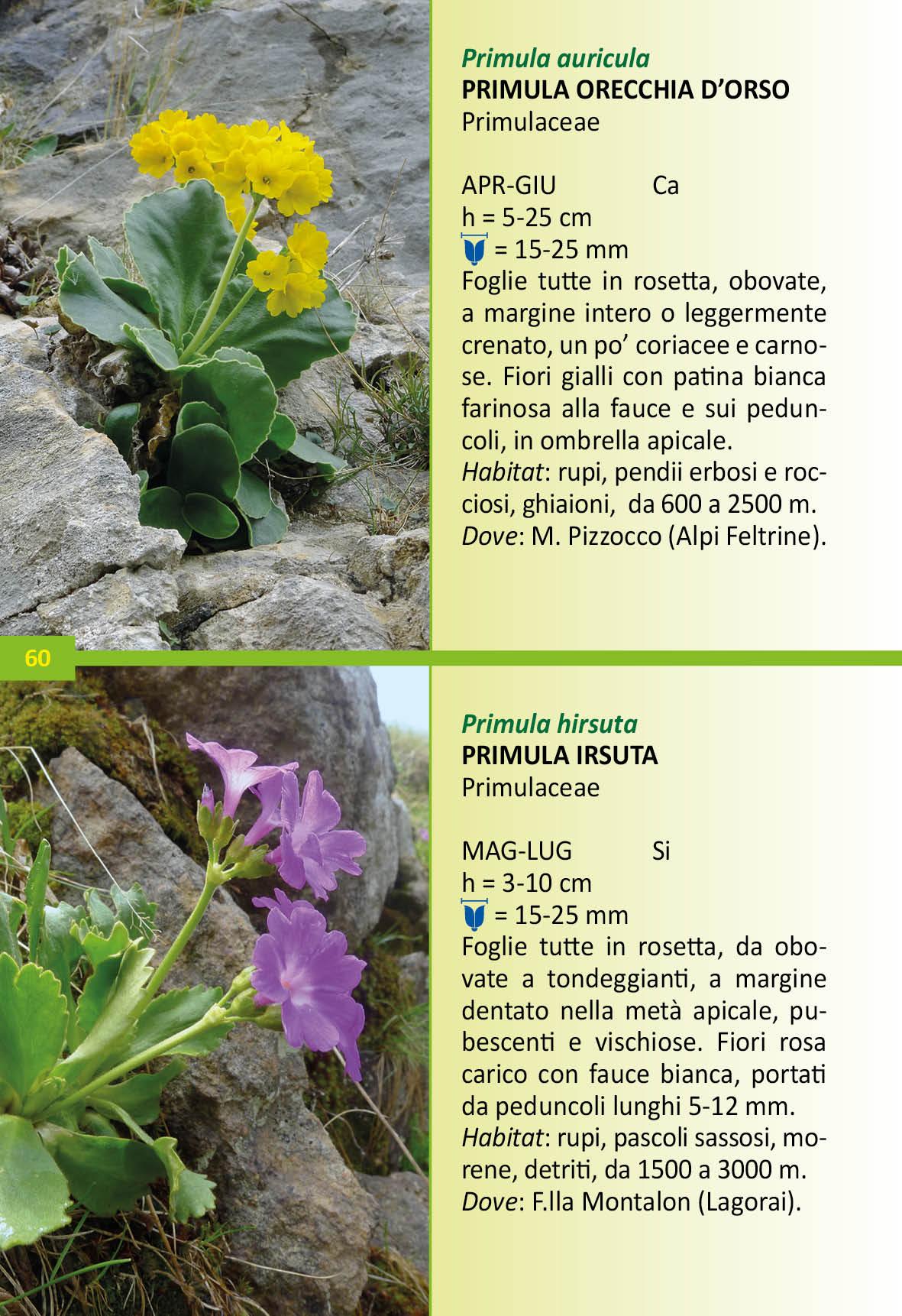 Fiori Con La F.Fiori Alpini Del Triveneto Fiori Alpini Di Veneto Trentino Alto